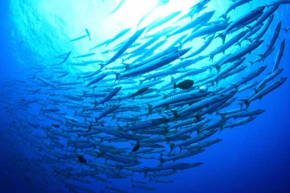 School Of Deep Sea Fish