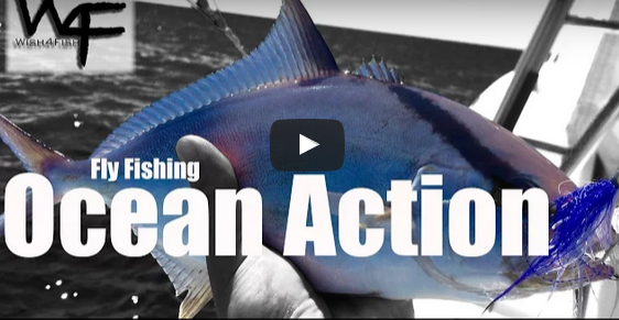 VIDEO: Offshore Fly Fishing with an 8wt? Yup!