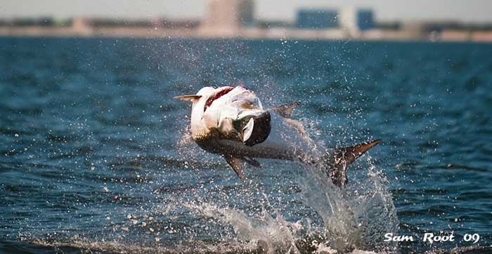 Challenge Your Limits – Tampa Bay Tarpon